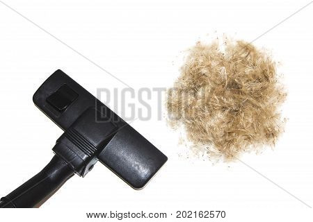 Cleaning of down and hair with a vacuum cleaner isolated on white background. Vacuuming brown hair wool of pet.