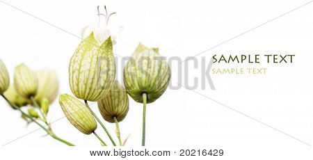 emerging young plant against white background and plenty of space for text