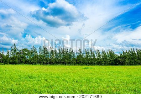 Green Grass, Background Image Of Lush Grass Field Under Blue Sky