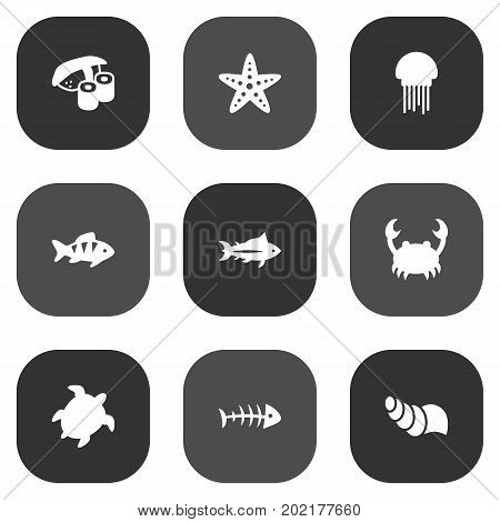 Collection Of Lobster, Tunny, Fish And Other Elements.  Set Of 9 Sea Icons Set.