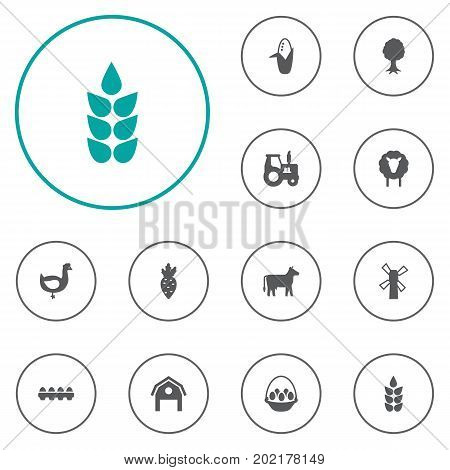 Collection Of Grain, Maize, Tray Of Eggs And Other Elements.  Set Of 12 Harvest Icons Set.