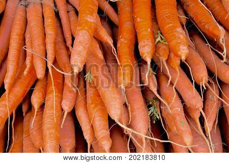 carrot close up, many carrots stacked, carrot lying upon another, carrots with roots