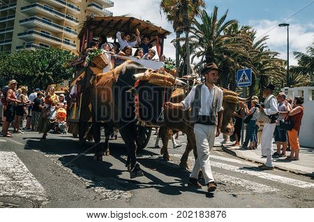 Puerto de la Cruz Tenerife Spain - May 30 2017: Decorated bull drawn wagon and Canarias people in traditional clothes participate in the parade. Tenerife celebrate the Day of the Canary Islands.