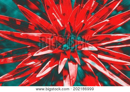 Crazy hallucinogenic. Abstraction a flower of red color.