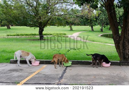 Three homeless stray dogs eating on the street.