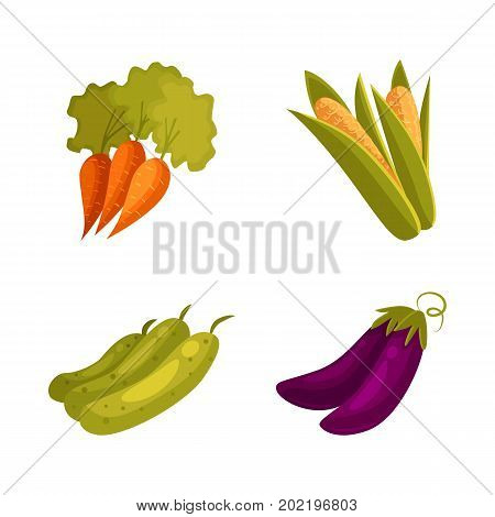 Set of cartoon farm vegetables - corn, carrot, zucchini, eggplant, vector illustration isolated on white background. Cartoon style whole raw corn, carrot, zucchini, eggplant vegetables, farm products