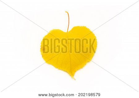 It Is Yellow Leaf Isolated