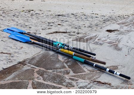 Several oars on the sand at the beach