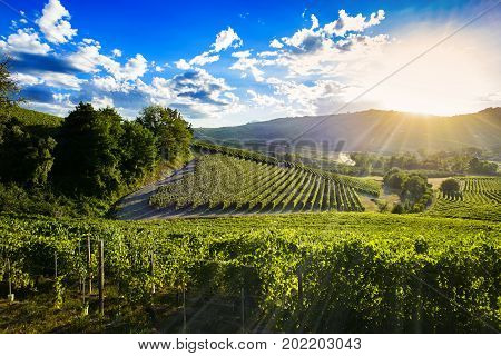 Spectacular Sunset Over The Green Vineyards Of Langa Piedmont