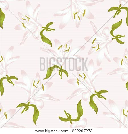 Seamless texture white Lily Lilium candidum a white flower with leaves vector illustration editable Hand drawn