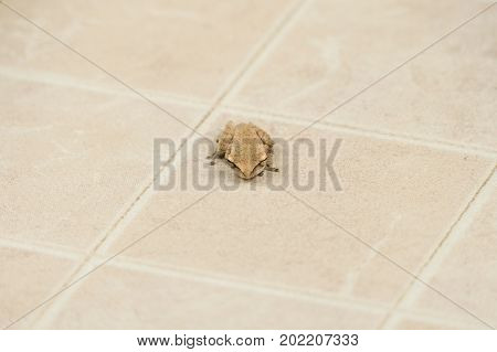 Common tree frog amphibian animal on floor