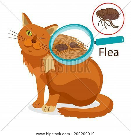 Cat Parasite. Pet Flea Treatment. Flea In The Fur As A Close Up Magnification Vector. Spread Of Infection. Pet Veterinary Medicine Vector. Flea Control for Cats.