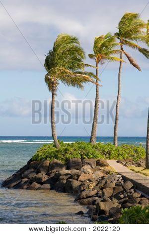 Palm Trees Ocean 2