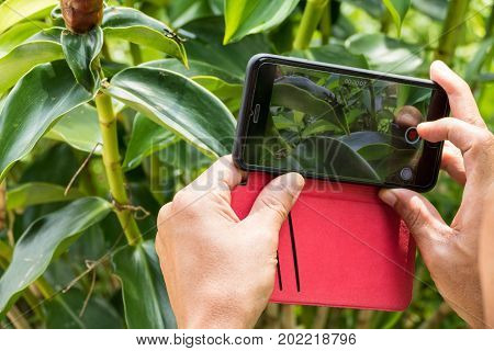 Man taking photo of grasshopper with mobile cell phone