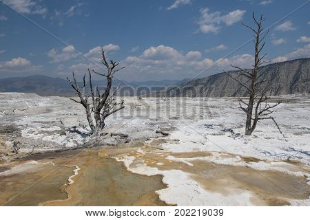 White Mammoth landscape with dead trees in Angel Terrace, Mamoth Hot Springs, Yellowstone National Park, WY