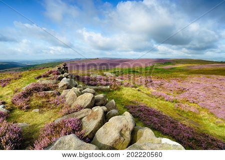 Summer heather at Carl Wark an ancient Iron Age Hillfort near Higger Tor in the Peak District National Park in Derbyshire looking out across Winyards Nick