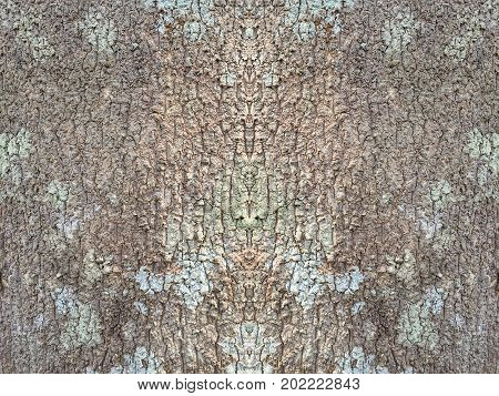 Bark of tree texture abstract brown pattern background
