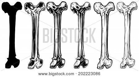 Graphic black and white different human bone vector set. Vol. 1