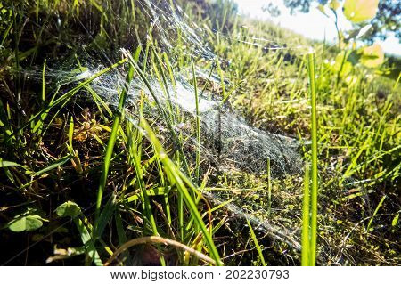 Spiderweb in the grass during a bright morning.
