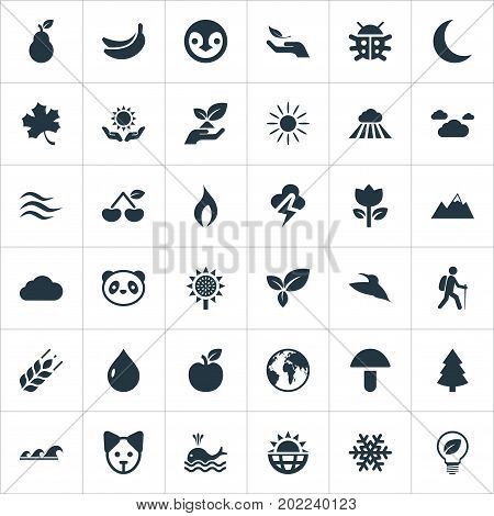 Elements Solar Energy, Fresh Food, Weather And Other Synonyms Hand, Sun And Insects.  Vector Illustration Set Of Simple Natural Icons.