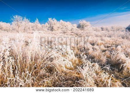 Hoar Frost Valley_1