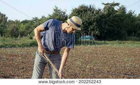 Farmer in hat removes weeds by hoe in corn field with young growth at organic eco farm. Concept: young plants, man working, hoeing in corn field, organic farm, rural lifestyle