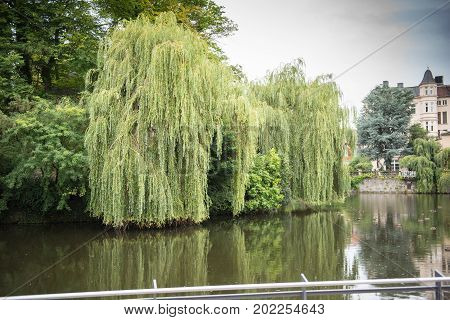 Lake with weeping willows in the castle in the city of Detmold