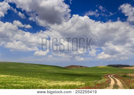 SPRINGTIME. Between Apulia and Basilicata. Hilly landscape with country road through wheat field end poppies dominated by clouds.Italy.