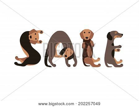 Sale. Vector Inscription of dachshund dogs letters