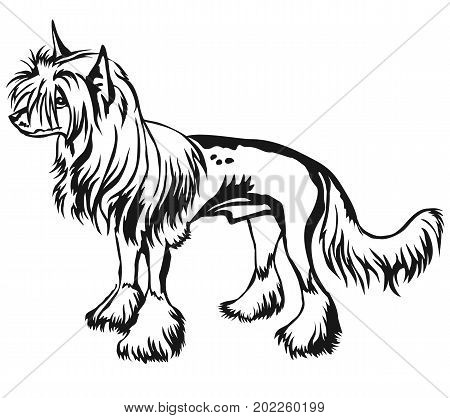 Decorative portrait of standing in profile Chinese Crested Dog vector isolated illustration in black color on white background