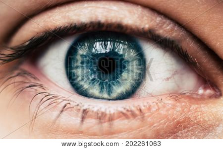 Human blue eye closeup macro amazing optical ophtalmology