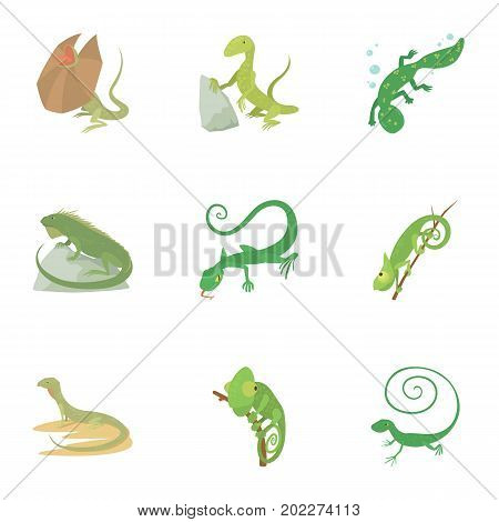 Lizard icons set. Cartoon set of 9 lizard vector icons for web isolated on white background