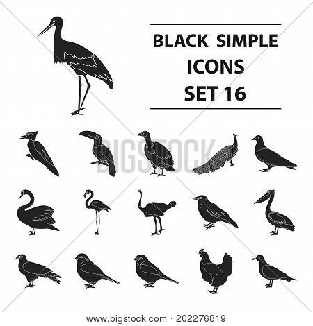 Bird set icons in black style. Big collection of bird vector symbol stock