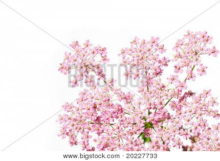 flora against white background. very useful design element. poster