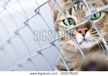 A cat in a cage, Animal and pet