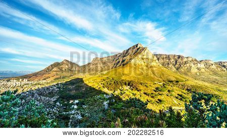 View of Table Mountain, Devils Peak and the Twelve Apostles from the hiking trail to the top of Lions Head mountain near Cape Town South Africa on a nice winter day