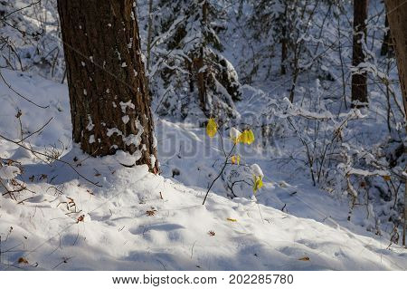 Close up winter landscape in the forest