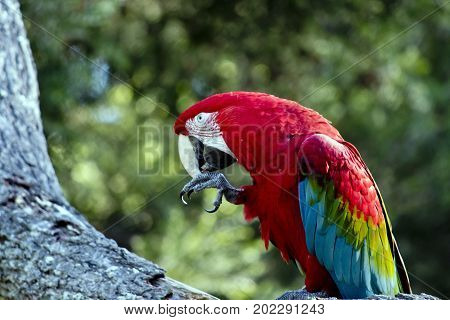 this is a close up of a scarlet macaw