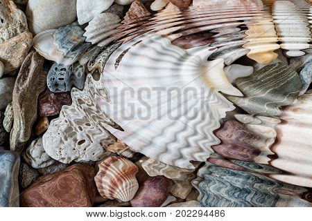 Detail of the water ripples above pebbles and seashells - digitally altered