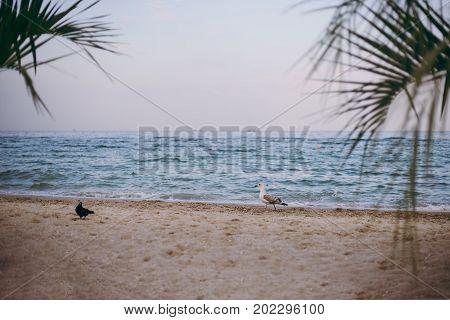 Two White Seagulls Sit On The Seashore
