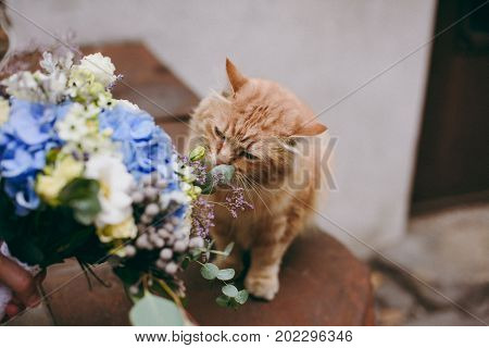 Red Cat Sniffs A Bouquet Of The Bride