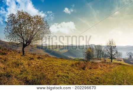 Trees On Hillside On Beautiful Autumn Morning