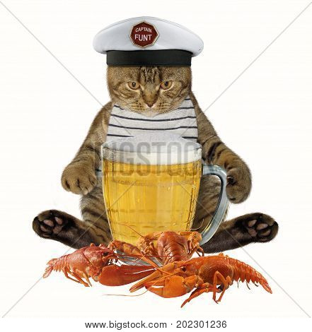 The captain cat is next to a big mug of beer and a boiled crayfish. White background.