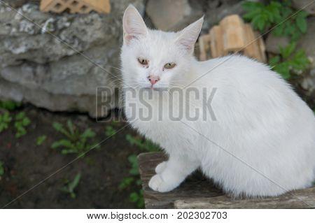 White Cat Macro