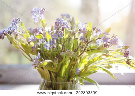Bouquet of the forget-me-nots or Myosotis in sunlight