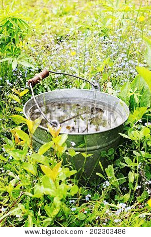 Bucket with rain water in the grass