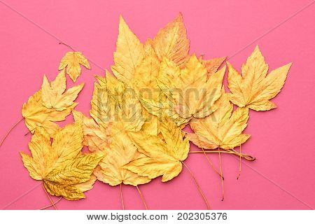 Autumn Fashion Fall Leaves Background. Vintage. Design. Yellow Fall Leaves on Pink. Trendy fashion Stylish Concept. Autumn Vintage