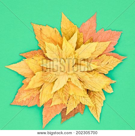 Autumn Fashion Fall Leaves Background. Vintage. Design. Yellow Fall Leaves on Green. Trendy fashion Stylish Concept. Autumn Vintage