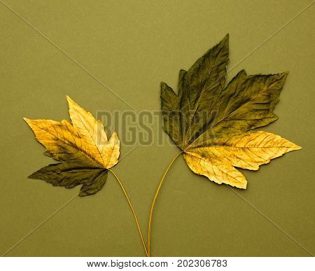 Fall Fashion Design. Art Gallery. Minimal. Fall Leaves Background. Yellow Green Maple Leaves Couple. Trendy fashion Stylish Concept. Autumn Vintage