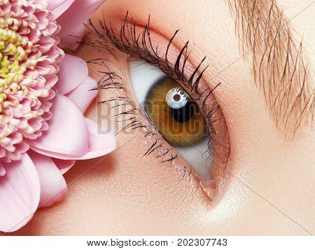 Beautiful Macro Shot Of Female Eye With Extreme Long Eyelashes And Natural Makeup. Perfect Shape Mak